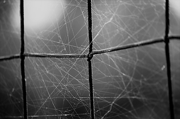 A spider web tangled in a net