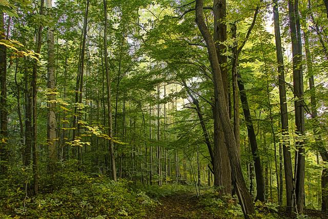 Woods trail..... Explore