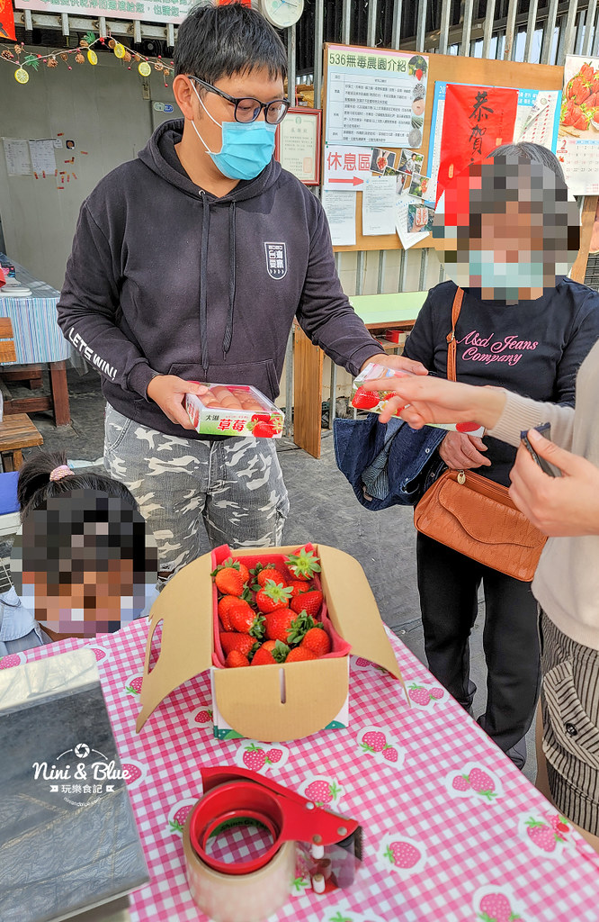 南投草屯採草莓 536無毒果園15