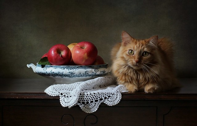 Leo and Apples