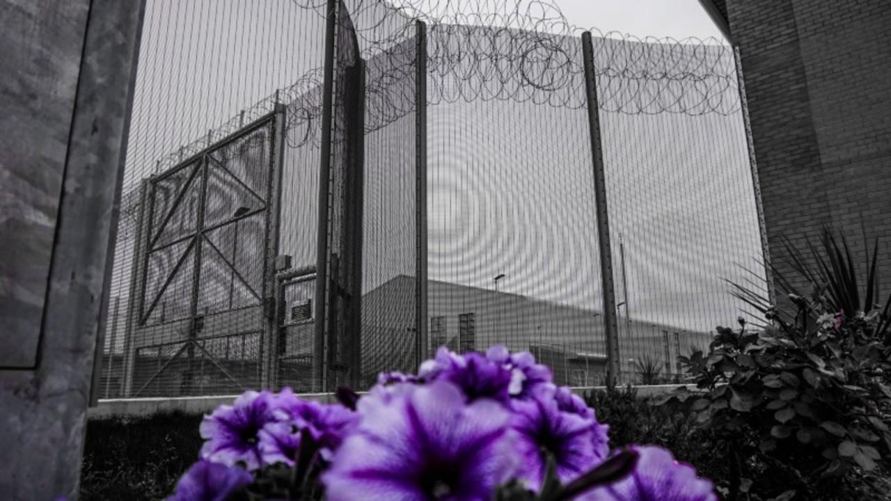 Purple flowers growing in a prison yard