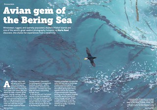 Free Content • Avian Gem of the Bering Sea | by Wild Planet Photo Magazine