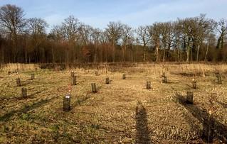 Limburgs Vrijwilligersbos