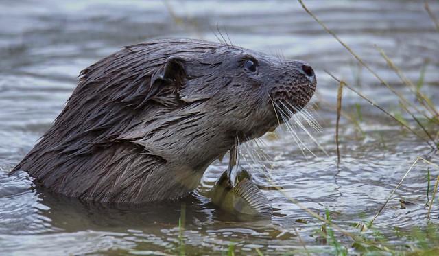 Otter -  Explore 22/2/21