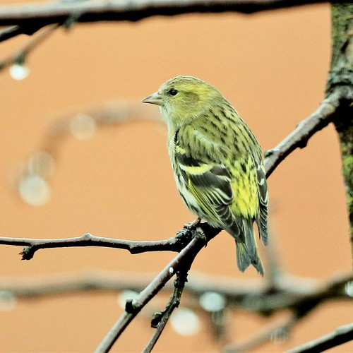 February 2021 Photography Competition - Winter Birds