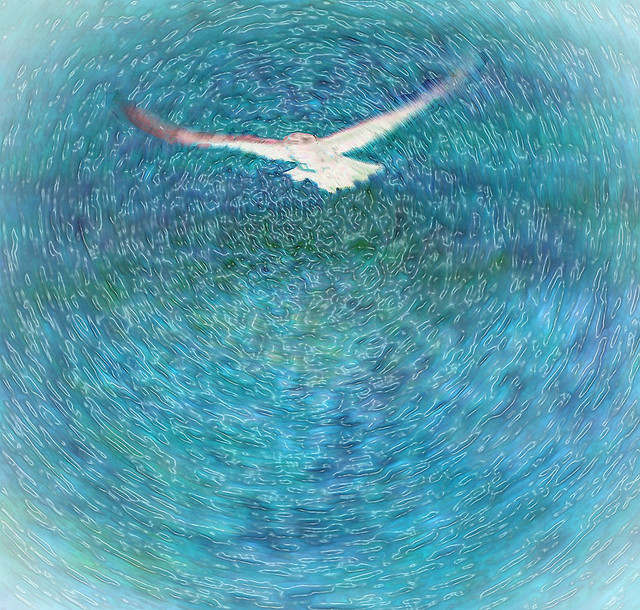 Soaring Above the Waves