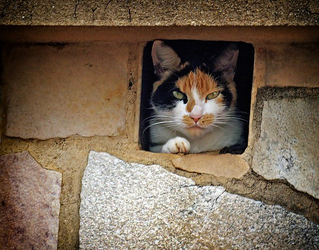Cat in the Chimney