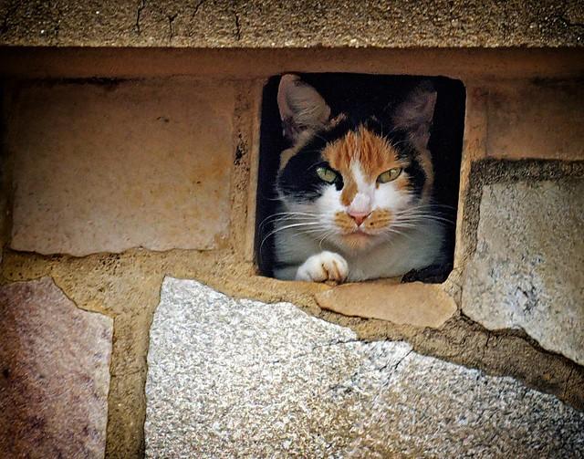 Cat in the Chimney