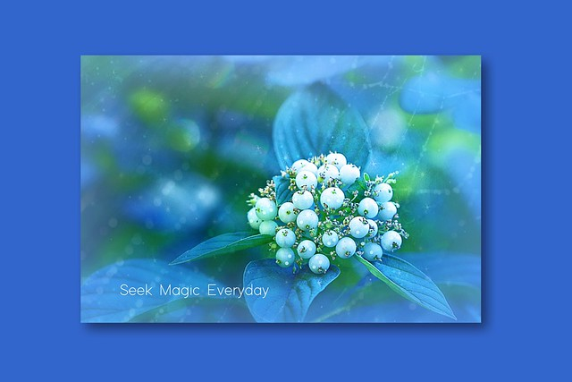 seek magic everyday . . .