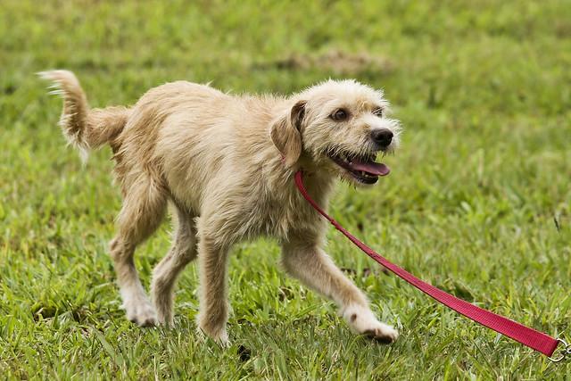 Vinte cachorrinhos prontinhos para adoção