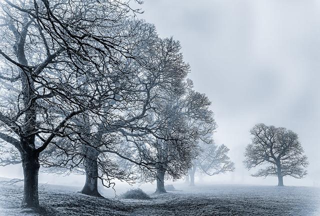 Curramore in the fog, Dec. 2020