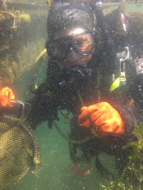 Forest Service diver Hilaire Bojonell removes Eurasian watermilfoil