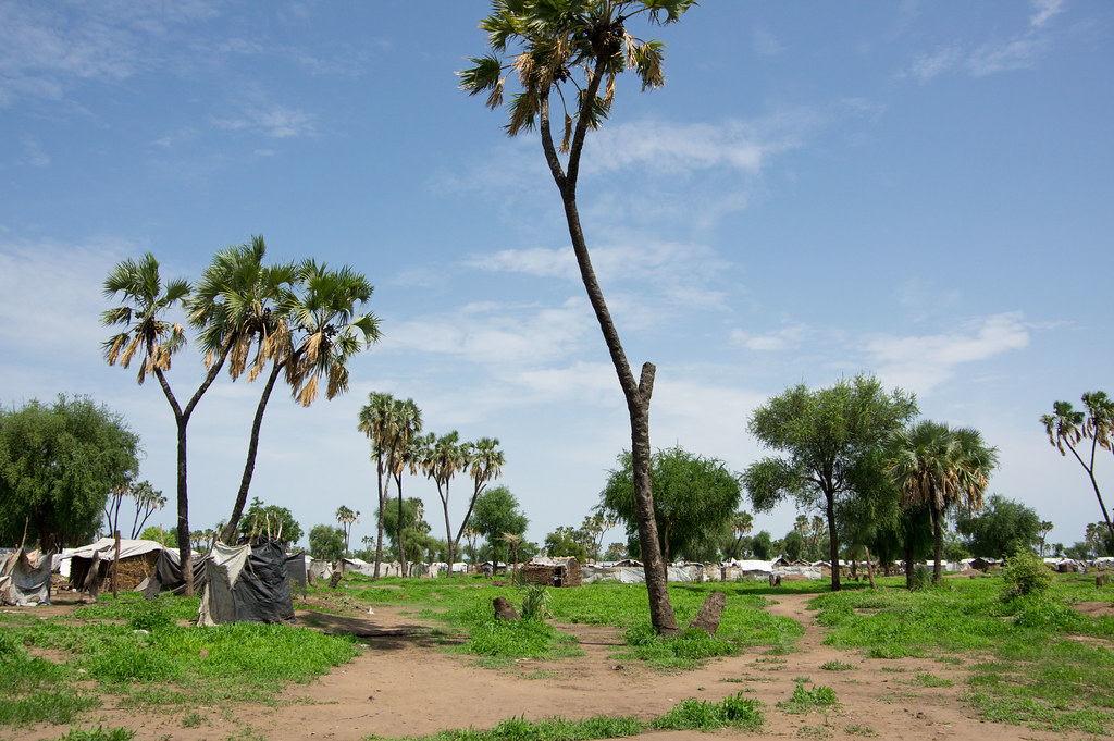 Refugee camps set up around palm trees in bright daylight.
