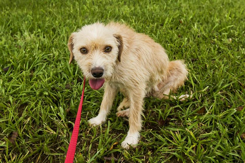 Zoonoses tem 20 cães aptos para adoção