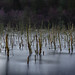 Frozen Pool in Delamere Forest, Cheshire, North West England