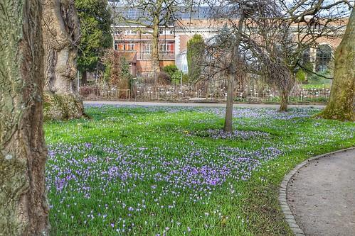 Vroege lente in de Leuvense Kruidtuin
