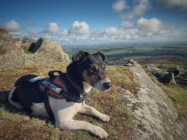 Nice day to go climbing with my little buddy Baxter...