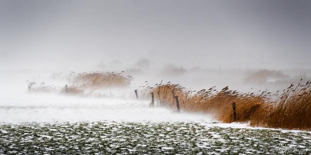 Snow Storm Darcy