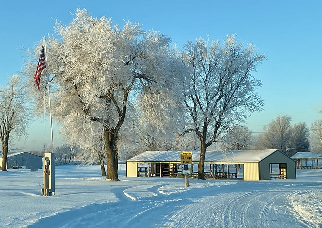 Fairgrounds Full of Early Morning Frosty Trees.