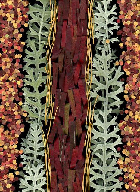 60931.01 Pyrus calleryana, Ginkgo biloba, Senecio cineraria 'Silver Dust', leaf punches