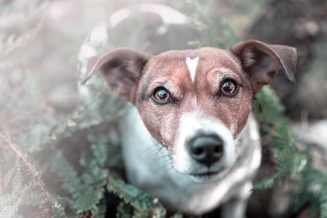 Souldog