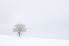 Canon RF 70-200mm F4 L IS USM Lens and The Lone Oak Tree in the Snow