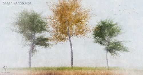 The Little Branch - Aspen Spring Tree - Shiny Shabby