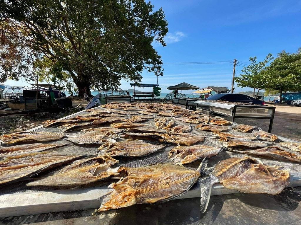 ปลาแห้งที่กลุ่มชาติพันธุ์ชาวเลฝั่งทะเลอันดามันเตรียมนำไปมอบให้ชาวกะเหรี่ยงบางกลอย