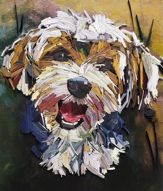 Quilled Havanese Portrait