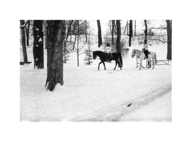 Caballos en Stromovka nevada