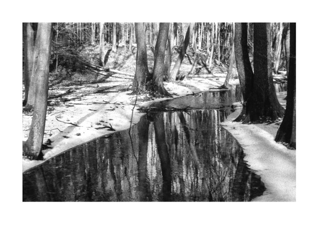 En el bosque todavía había nieve