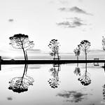 B/W reflections