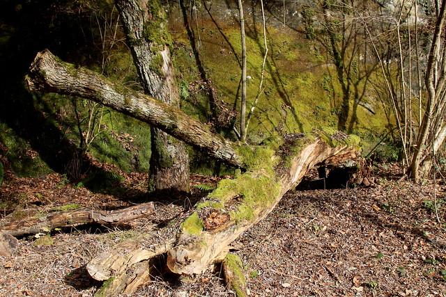 Schwarzwassergraben im Schwarzenburgerland im Berner Mittelland im Kanton Bern der Schweiz