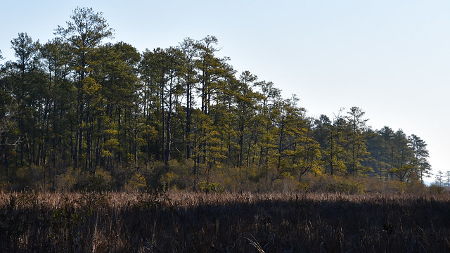 Colonial Parkway | 21.02.20 | DSC_5571