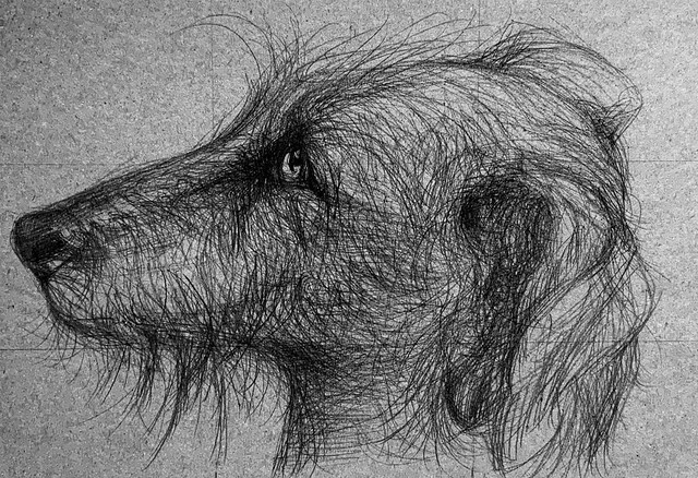 Portrait of a dog. Ballpoint pen only drawing by jmsw on recycled card.