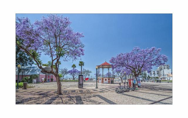 Spring in the Algarve