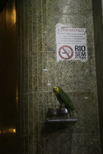 O papagaio