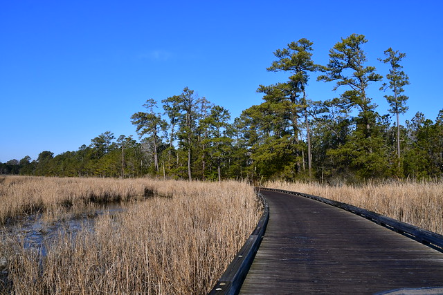 Colonial Parkway | 21.02.20 | DSC_5575
