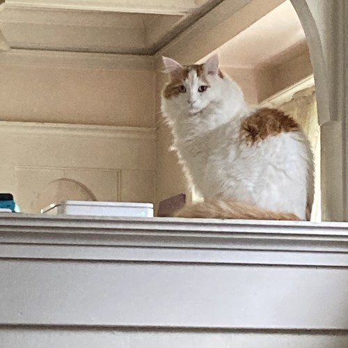Ozy on the ledge