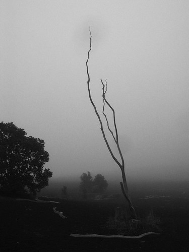canonpowershotg3 volcaniclandscape recoveringlandscape deadtree grey gray mist fog afternoon devastationtrail volcanoesnationalpark volcanoesnp hawaiivolcanoesnationalpark hawaiivolcanoesnp bigisland hawaii bw blackwhite blackandwhite