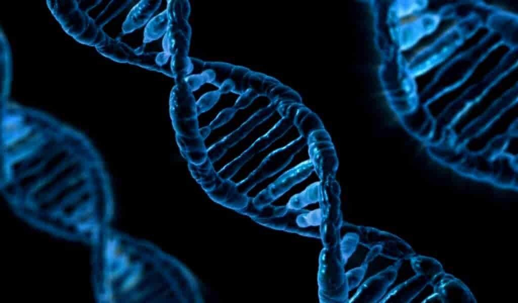 Des chercheurs inventent un nouvel outil d'édition des gènes