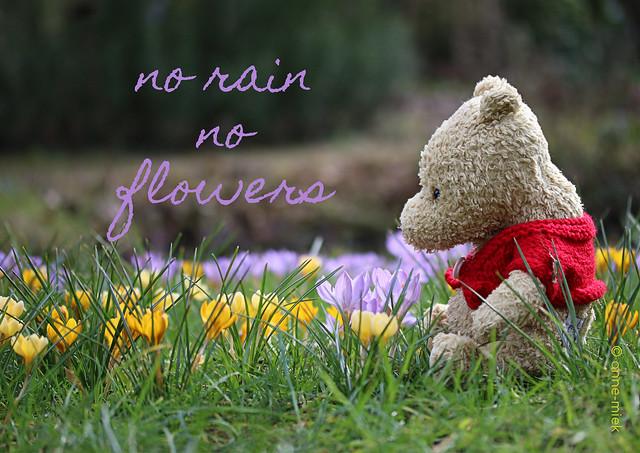 NO RAIN NO FLOWERS || NA REGEN KOMT ZONNESCHIJN