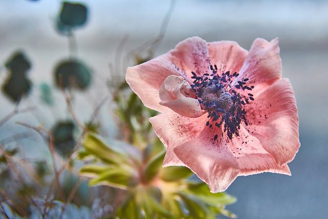 Flowers in the winter break