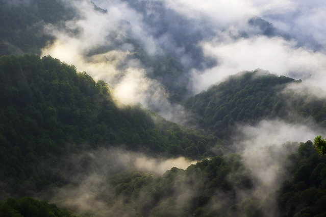 Clouds - fog in the mountains
