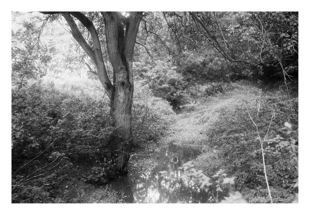 FILM - small stream by the lake
