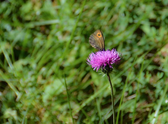 Nel bosco: il fiore e la farfalla