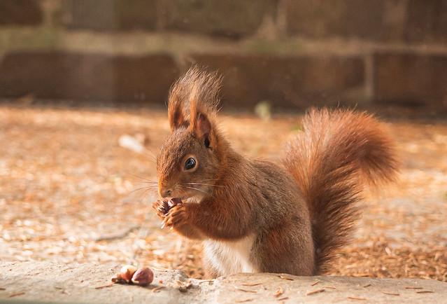 Squirrel @ Brunch