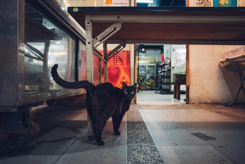 黑喵|Taichung