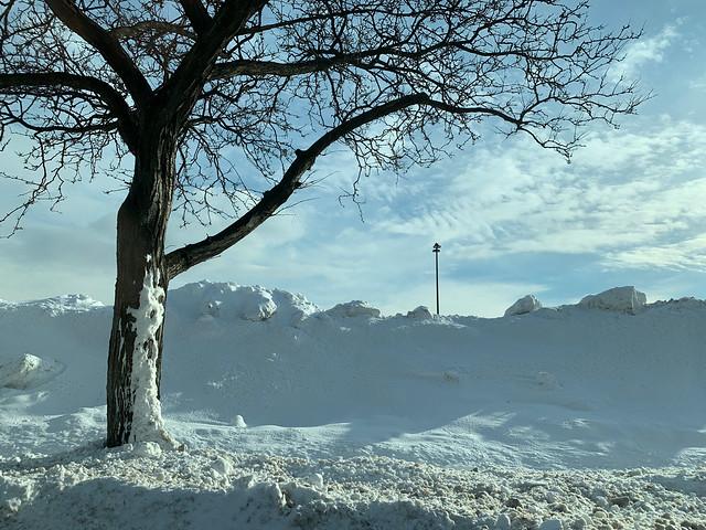 Winter Scene, Niles, Illinois, February 17, 2021 6 full