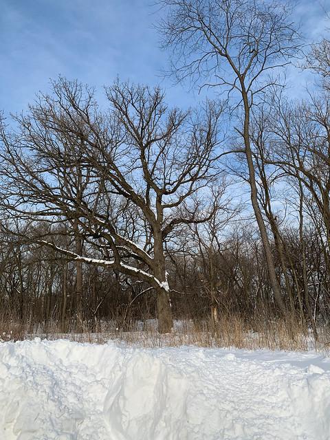 Winter Scene, Linne Woods, Morton Grove, Illinois, February 17, 2021 8 full